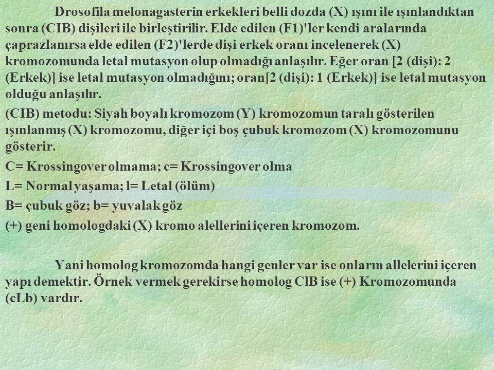 Drosofila melonagasterin erkekleri belli dozda (X) ışını ile ışınlandıktan sonra (CIB) dişileri ile birleştirilir. Elde edilen (F1) ler kendi aralarında çaprazlanırsa elde edilen (F2) lerde dişi erkek oranı incelenerek (X) kromozomunda letal mutasyon olup olmadığı anlaşılır. Eğer oran [2 (dişi): 2 (Erkek)] ise letal mutasyon olmadığını; oran[2 (dişi): 1 (Erkek)] ise letal mutasyon olduğu anlaşılır.